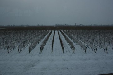 Jefford on Monday: Ice Station Niagara | decanter.com | Wine and food | Scoop.it