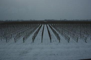 Jefford on Monday: Ice Station Niagara | Vitabella Wine Daily Gossip | Scoop.it