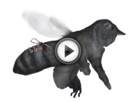 WTF du Lundi : un beatbox déjanté qui combine chats, chaussures et abeilles | Histoire de chats | Scoop.it