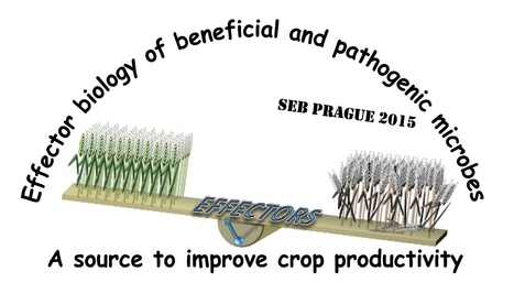 SEB Prague 2015: Plant Biology Sessions, June 30-July 3 | Hot topics on Science, biotechnology and plant pathology | Scoop.it