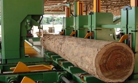 Filière bois : L'industrie du sciage progresse de 6% en 2015 | Approvisionnement et Première Transformation | Scoop.it