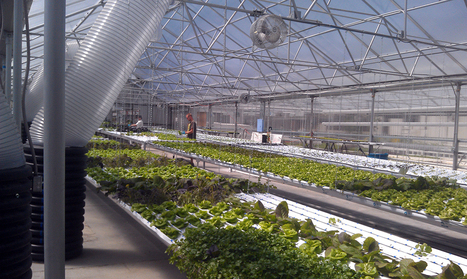 The GrowHaus: A Community and Food Revolution | Aquaponics~Aquaculture~Fish~Food | Scoop.it