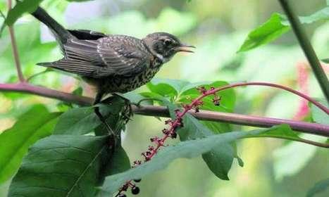 Backyard birds enhance life in urban neighborhoods | Very Interesting... | Scoop.it