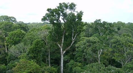 La Amazonía ayuda a reducir el efecto invernadero | Atmósfera, ecología y recreación | Scoop.it