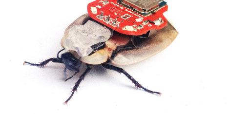 Insectes cyborg : petits robots et grosses questions | EntomoNews | Scoop.it