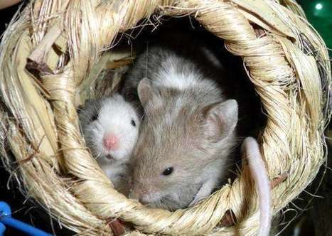 Gut microbiome of mother found to impact immunity of mice pups | Preventive Medicine | Scoop.it