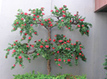 Outdoor Artificial Trees - Commercial Silk Int'l | Home Improvement and Lifestyle | Scoop.it
