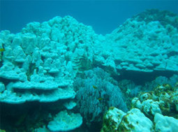NOAA Proposes Listing 66 Reef-building Coral Species under the Endangered Species Act :: NOAA Fisheries   Y7 Planet Under Pressure   Scoop.it