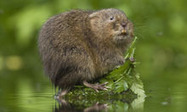 England faces wildlife tragedy as worst drought in 30 years hits habitats | 100 Acre Wood | Scoop.it