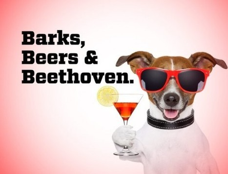 Have a beer with your dog in the park - Fenuxe | pets | Scoop.it