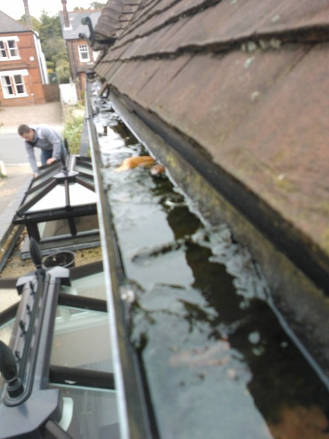 Trapped rainwater in your gutters is heavy - Gutter Cleaning London | Gutter Clearing | Scoop.it
