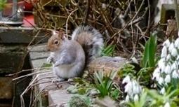 Hazards galore in squirrel's hunt for food | Nature Flash | Scoop.it