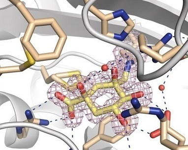 CiQUS researchers develop a compound that reduces bacterial virulence - Biotech Spain | Membrane vesicle trafficking | Scoop.it