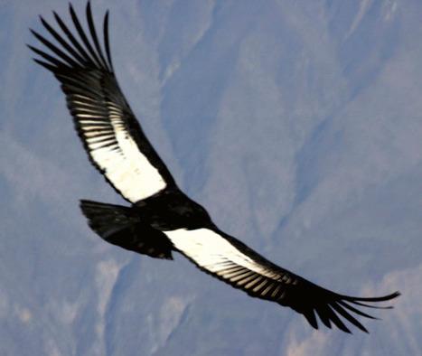 El Condor ...   Terroir   Scoop.it