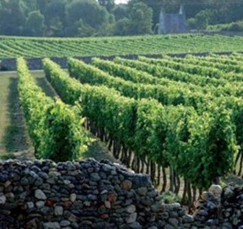 Vins de Loire : 1,8 millions d'euros pour communiquer et différencier 51 appellations | Le meilleur des blogs sur le vin - Un community manager visite le monde du vin. www.jacques-tang.fr | Scoop.it