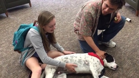 Dogs visit UT libraries for final exam study breaks | Tennessee Libraries | Scoop.it