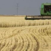 Poor wheat crop in Argentina, which is expected to limit exports | Maize | Scoop.it