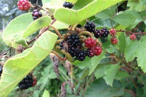 Au jardin sans pétrole, c'est le temps de la cueillette automnale | Les colocs du jardin | Scoop.it