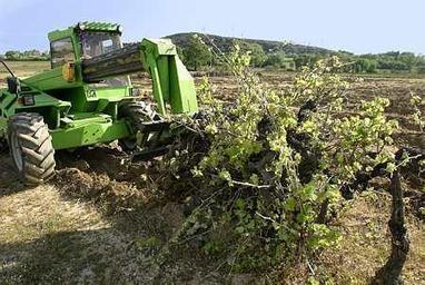 Arrachages : 3 % du vignoble français supprimé définitivement en trois ans | Viticulture | Scoop.it