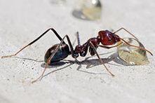 Karınca İlaçlama - İzmir İlaçlama   Böcek İlaçlama Şirketi   Scoop.it