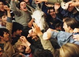 Abolish Abuse of Donkeys in Spanish Festival   Nature Animals humankind   Scoop.it