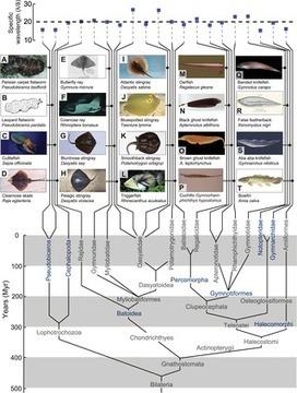 Convergent Evolution of Mechanically Optimal Locomotion in Aquatic Invertebrates and Vertebrates | Papers | Scoop.it