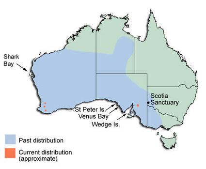 Nature fact sheets - Woylie | Australian Wildlife - The Woylie | Scoop.it