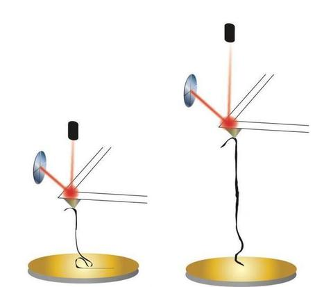 Nanoribbons in solutions mimic nature | Fragments of Science | Scoop.it