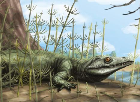 'Vovô jacaré' de 250 milhões de anos do RS pode dar pistas sobre evolução | Milhares de milhões de anos... a mesma Terra ! | Scoop.it