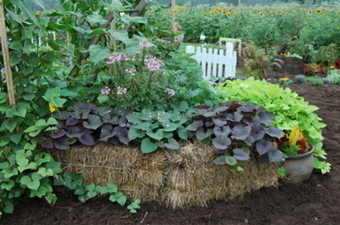 Straw bale gardening class back by popular demand | The Isanti ... | Gardening ideas | Scoop.it
