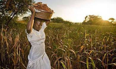 World food day: the search for sustainable crops | 9 SOSE Farm to Fridge Food Investigation | Scoop.it