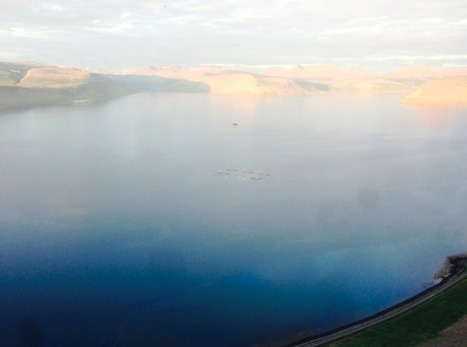 Icelandic salmon startup looks for industry investor - Undercurrent News   Global Aquaculture News & Events   Scoop.it