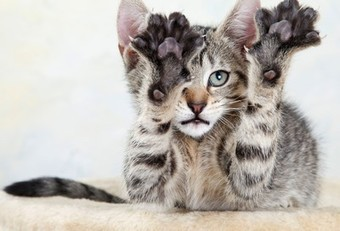 New Documentary Condemns Declawing of Cats; Who Is Right? | Social Media Slant 4 Good | Scoop.it