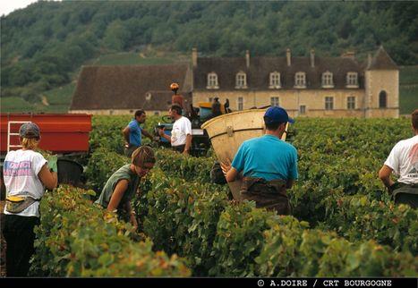 Vendanges 2012 : 12 vignerons témoignent   Tourisme viticole en France   Scoop.it
