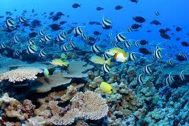Submarine springs reveal how coral reefs respond to ocean acidification - environmentalresearchweb | The Water Steward | Scoop.it