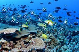 Submarine springs reveal how coral reefs respond to ocean acidification - environmentalresearchweb | Water Stewardship | Scoop.it