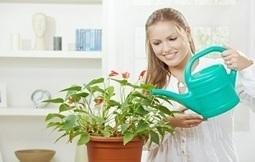 Des idées et astuces Jardinage et piscine, des trucs simples | bon remise | Scoop.it