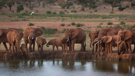 How Paul Allen's $7 million and big data are combating Africa's elephant crisis | conservation & antipoaching | Scoop.it