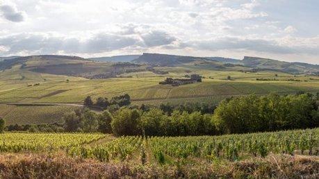« Insecticide mon amour » : le plaidoyer d'un ouvrier viticole contre les pesticides | Des 4 coins du monde | Scoop.it