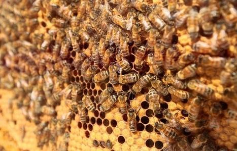 Biodiversité: Les abeilles bientôt mieux protégées par la loi - 20minutes.fr | Biodiversité ordinaire et fonctionnelle en agriculture | Scoop.it