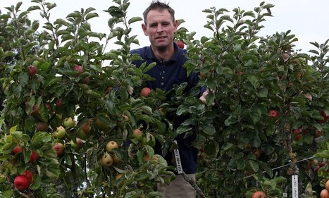 Gardener's one apple tree with 250 varieties grafted onto it | Erba Volant - Applied Plant Science | Scoop.it