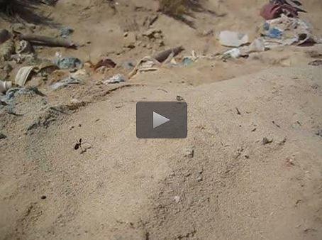 Les deux GPS de la fourmi du désert | EntomoNews | Scoop.it