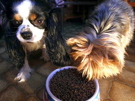 Pet Food Stamp Program Started For Low-IncomeFamilies - CBS Dallas / Fort Worth | News You Can Use - NO PINKSLIME | Scoop.it