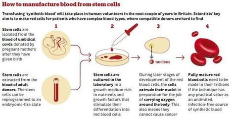 Synthetic Blood Transfusions Are Coming | News we like | Scoop.it