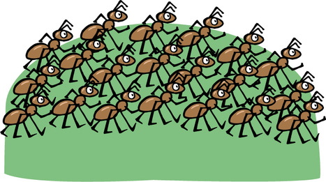 On The Ant Highway, There's Never A Backup | All About Ants | Scoop.it
