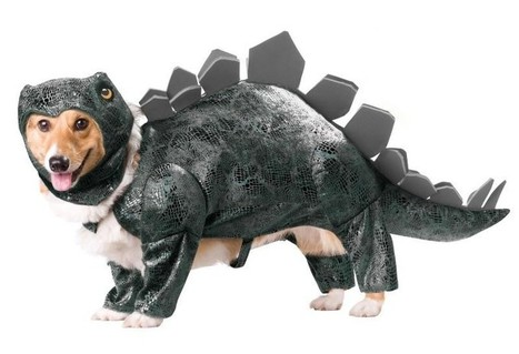 Totally Hilarious Dog Costumes For Halloween | HotHotter | Scoop.it