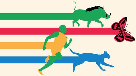 How History's Best Athletes Compare To Extremely Average Animals   Anaquel de libros, blogs y videos   Scoop.it