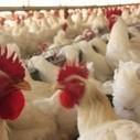 Para ir além do alimento-mercadoria | vida&sustentabilidade | Scoop.it