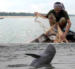 CAMBODIA: Communities want to ban gillnet use to protect dolphins | Global Insights | Scoop.it