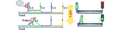 Un trenino molecolare sul DNA | Med News | Scoop.it
